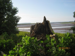 old tree stump, photo by Shelley Porter